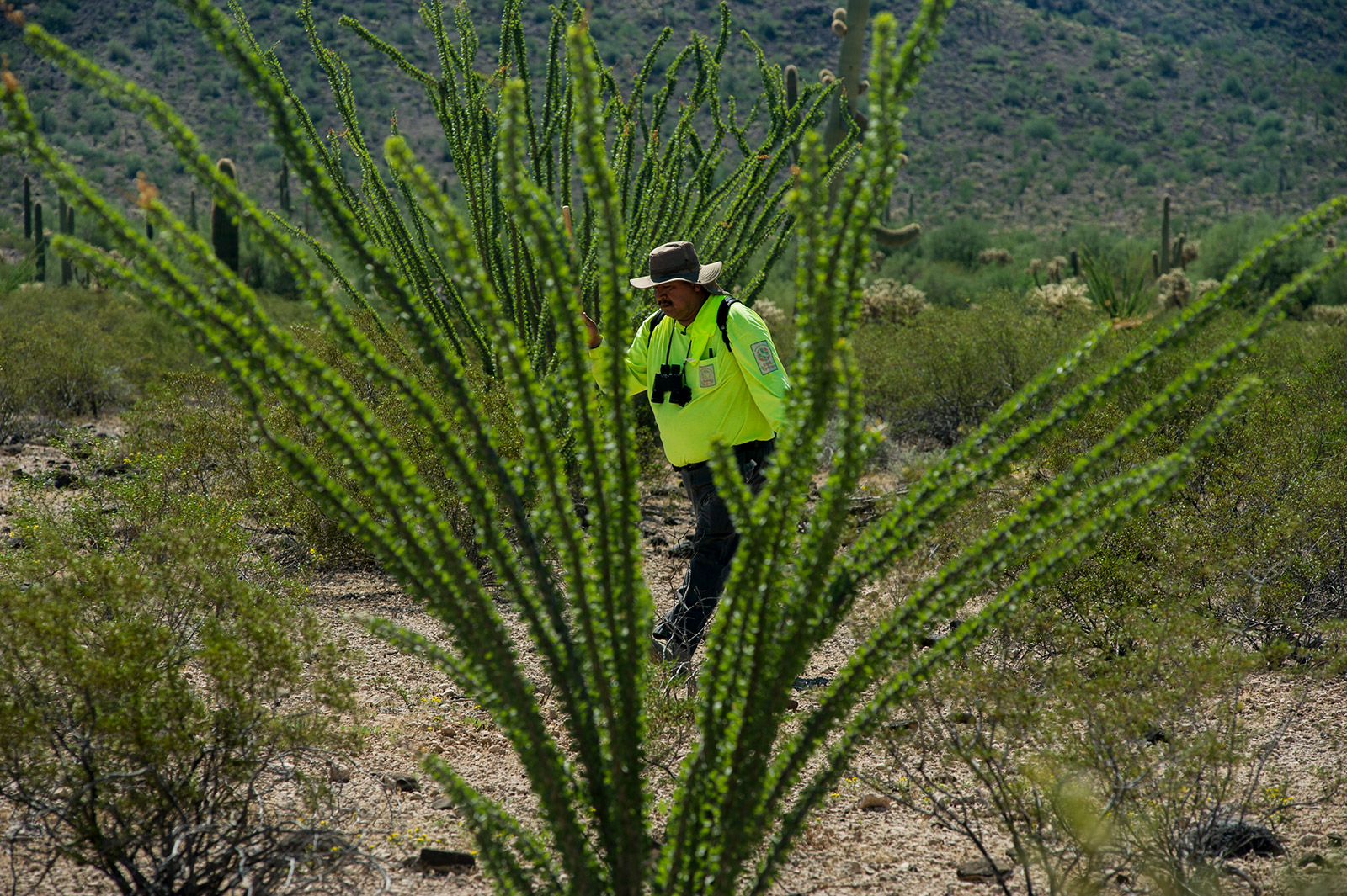 Ely Ortiz, founder and leader of Aguilas Del Desierto, walks between Ocotillo plants in the Arizona desert on Aug. 26, 2017, while searching for missing migrants near the U.S.-Mexico border. <em>(Brandon Quester/inewsource)</em>