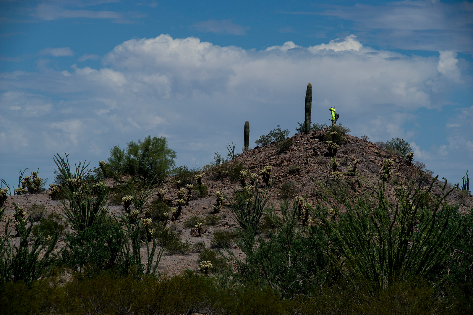 One of nearly two dozen volunteers with Aguilas Del Desierto uses a small hill to scan the Arizona desert for missing migrants near the U.S.-Mexico border on Aug. 26, 2017. The group uses radios to communicate and wear neon yellow shirts as they span out across the desert. <em>(Brandon Quester/inewsource)</em>